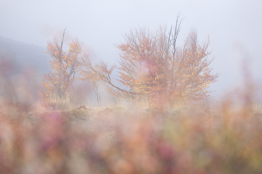 Colors in fog